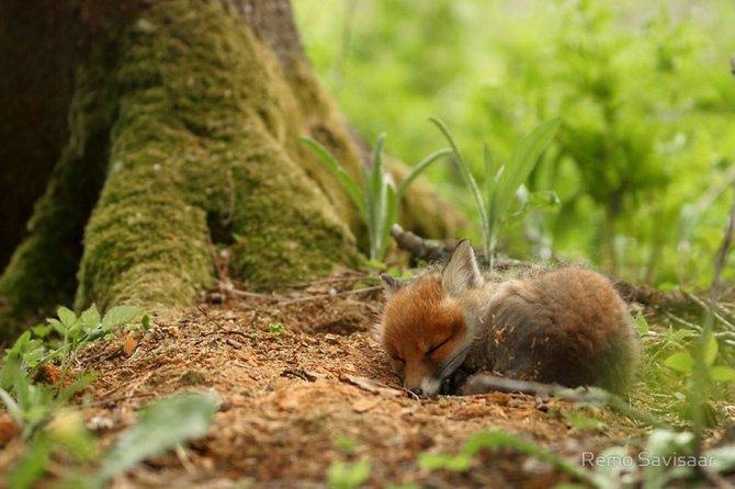 amazing fox photos 11