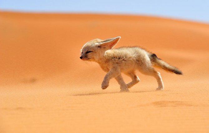 amazing fox photos 12