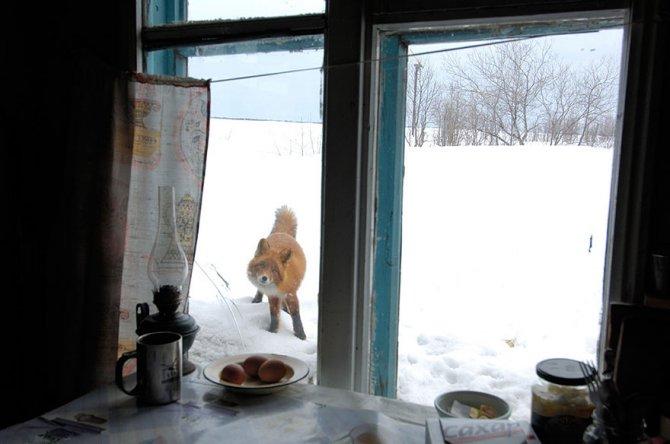 amazing fox photos 14