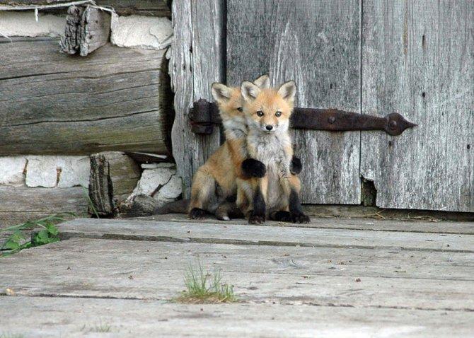 amazing fox photos 17