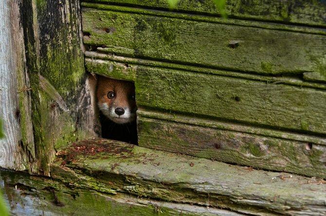 amazing fox photos 19