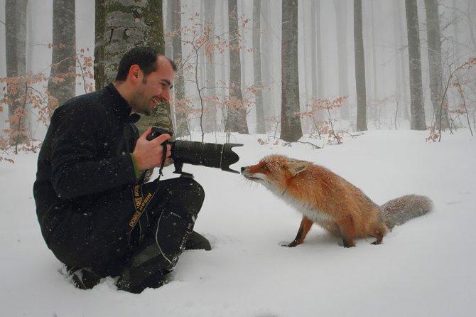 amazing fox photos 20 1