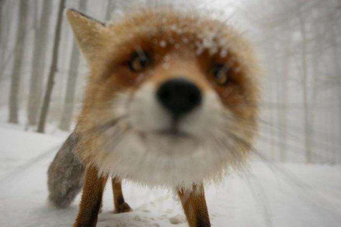 amazing fox photos 20 2