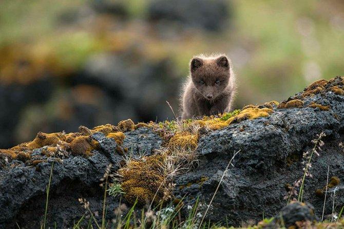 amazing fox photos 24