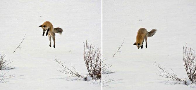 amazing fox photos 28 2