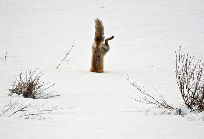 amazing fox photos 28
