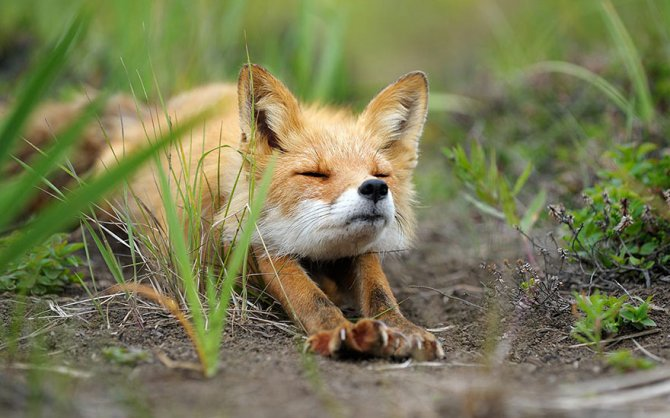 amazing fox photos 3