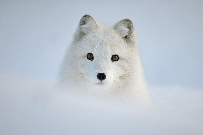 amazing fox photos 5