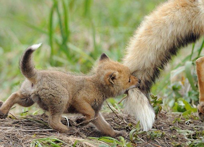 amazing fox photos 6