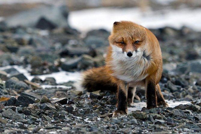 amazing fox photos 8