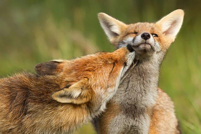 amazing fox photos 9