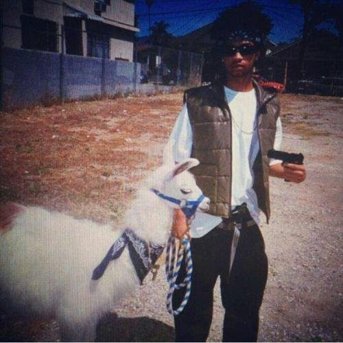 badass fails llama gangsta
