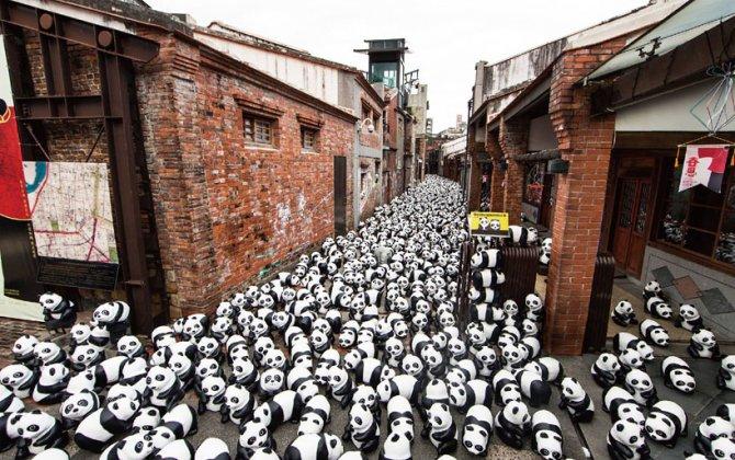 1600 pandas in hong kong designboom 12