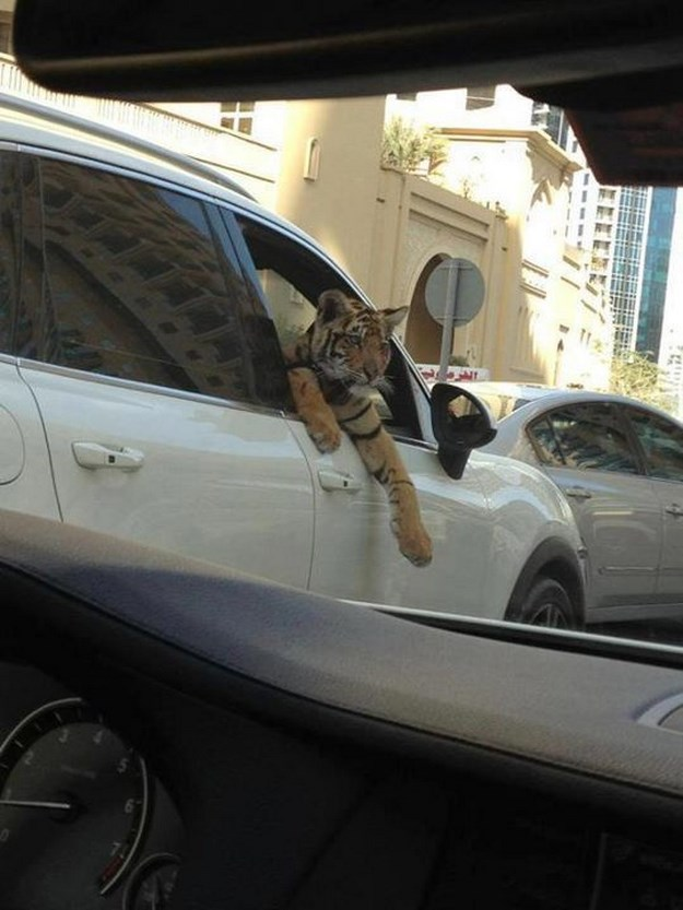 Dubai-es-diferente-16