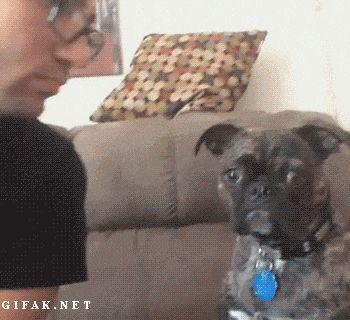 awkward kisses dog no