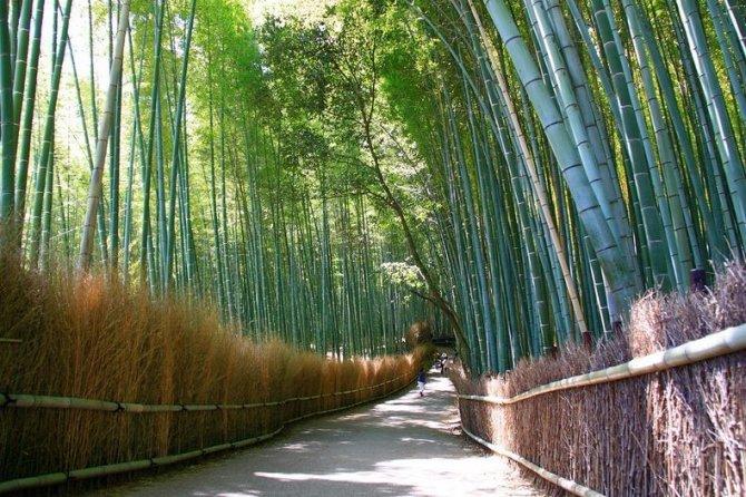 sagano-bamboo-forest-12-resize2[2]