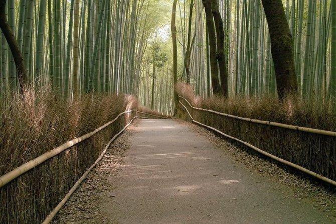 sagano-bamboo-forest-14-resize2[2]