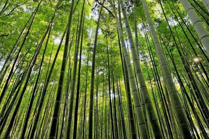 sagano-bamboo-forest-2-resize2[2]