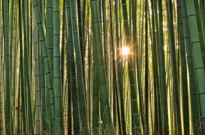 sagano-bamboo-forest-4-resize2[2]