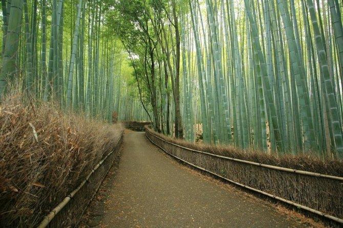 sagano-bamboo-forest-8-resize[2]
