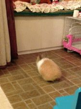 animals-who-are-terrible-at-judging-distances-16