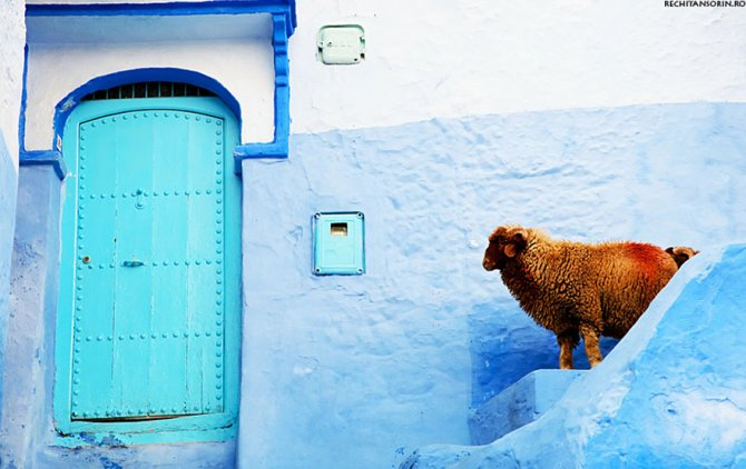 blue streets of chefchaouen morocco 8