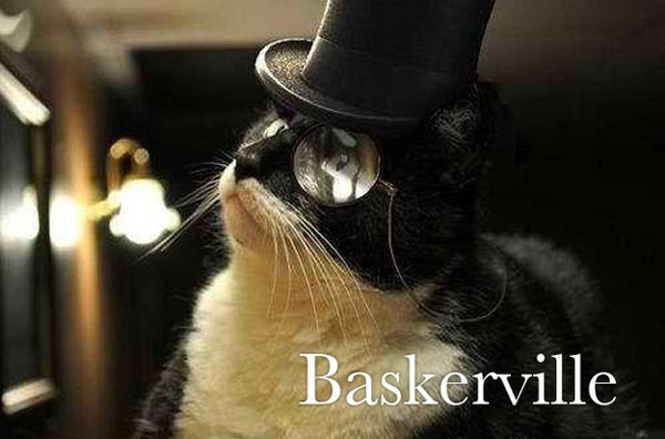 cats as fonts 16