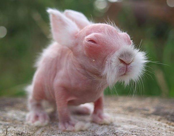 hairless bald animals 1