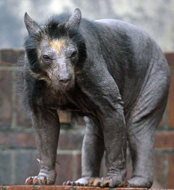 hairless bald animals 5