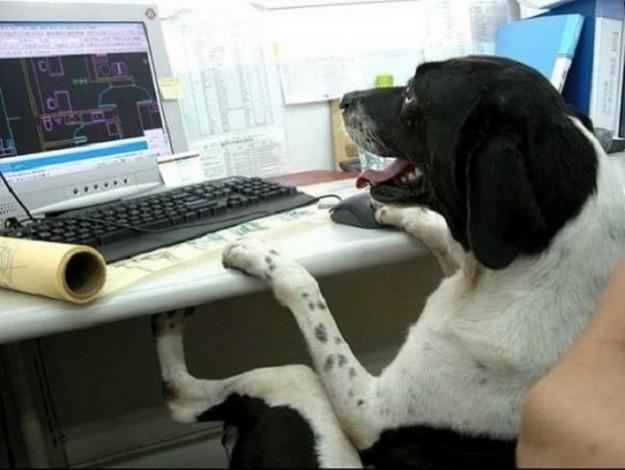cane-seduto-al-computer