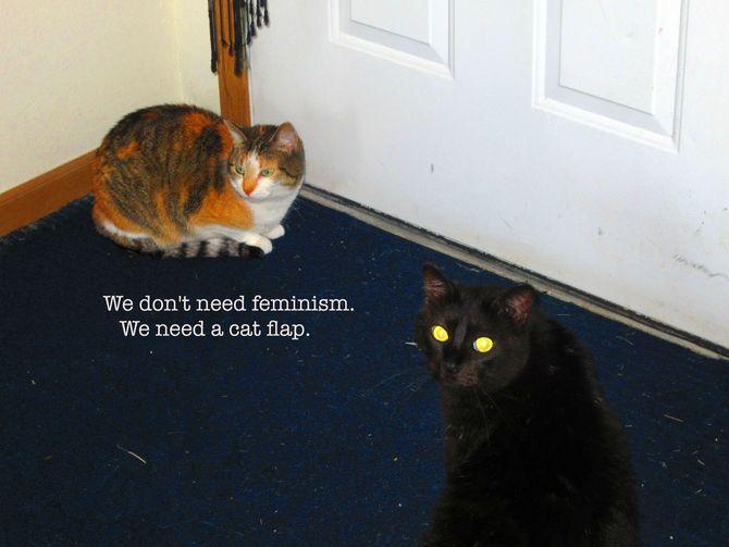 cats-flap