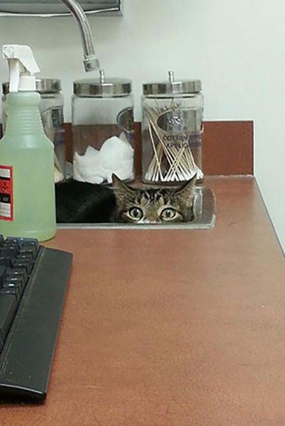animali cani gatti paura veterinario 2