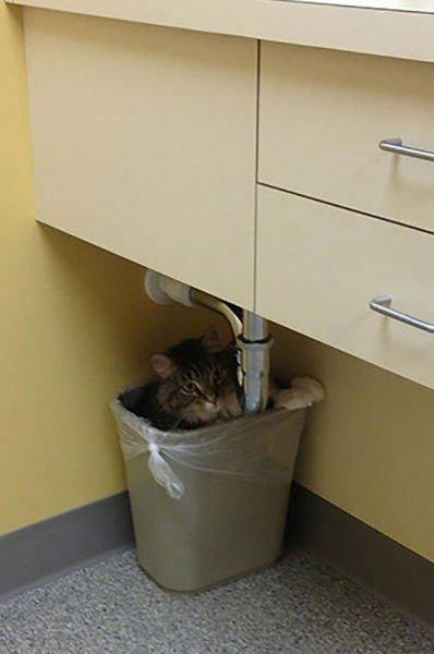 animali cani gatti paura veterinario 6