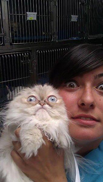 animali cani gatti paura veterinario 10