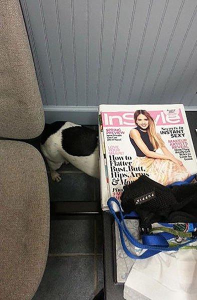 animali cani gatti paura veterinario 16