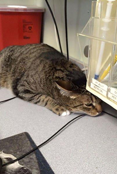 animali cani gatti paura veterinario 18