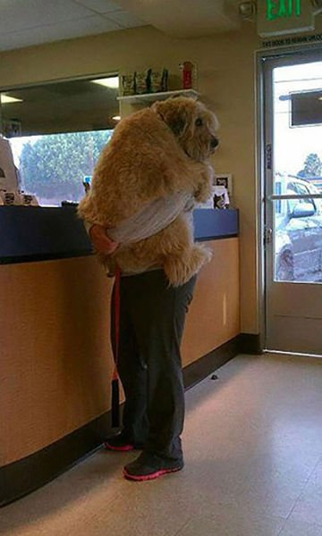 animali cani gatti paura veterinario 27