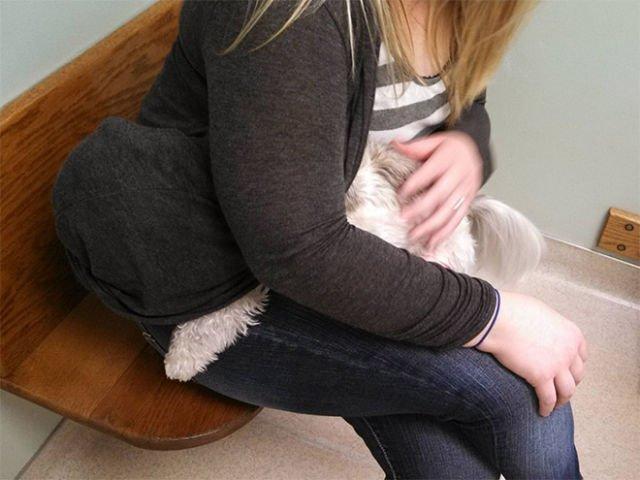 animali cani gatti paura veterinario 1