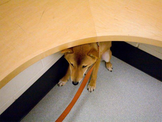animali cani gatti paura veterinario 9