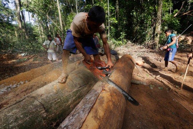 amazzonia tribu attacca taglialegna alberi 8