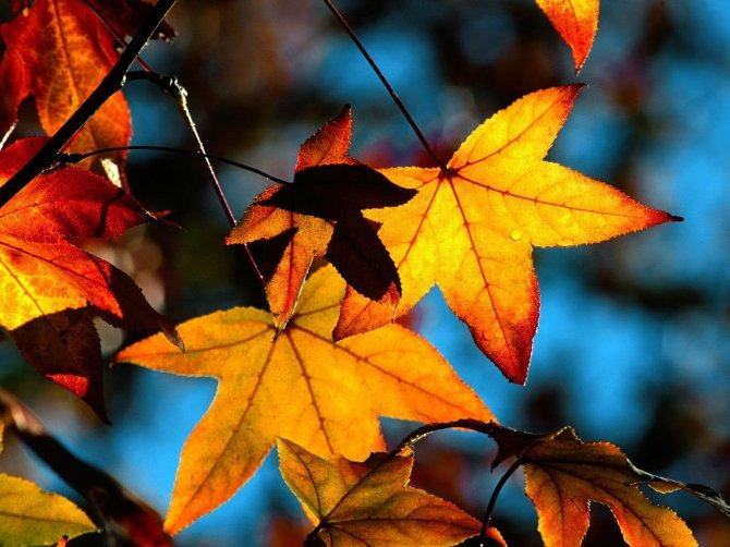 autumn-leaves-light-wallpaper
