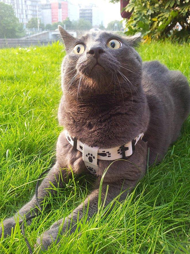 cat reaction2