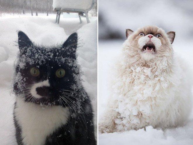 cat reaction6