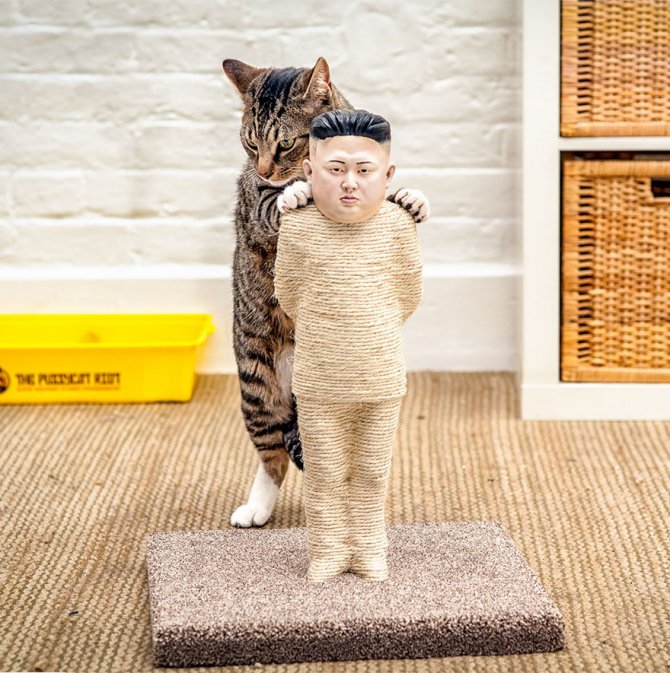 cat-scratchers-putin-kim-jong-1