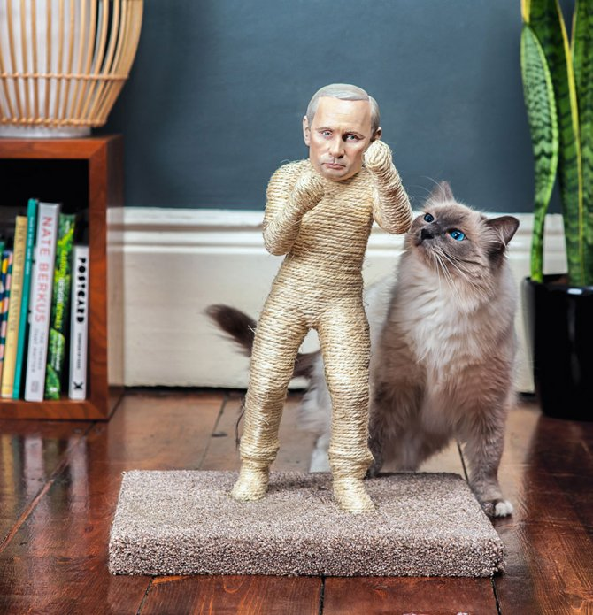 cat-scratchers-putin-kim-jong-4