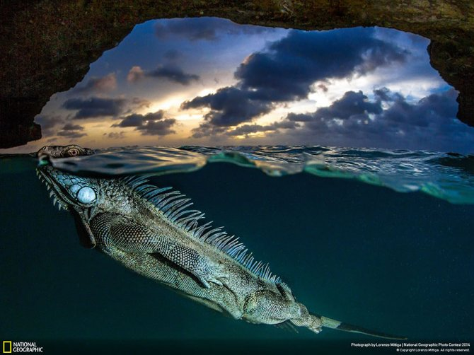 national geographic photo contest 2014 photography 16