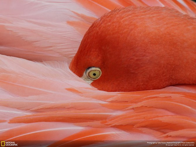 national geographic photo contest 2014 photography 20