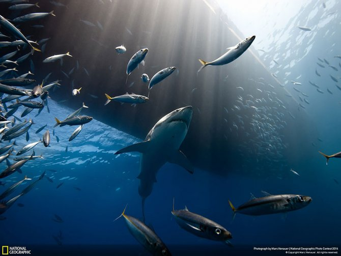 national geographic photo contest 2014 photography 4