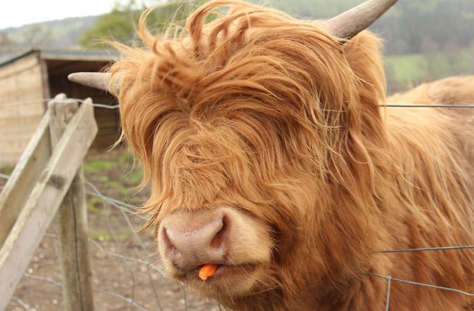 XX Animals That Need To Get A Haircut Real Bad15 880