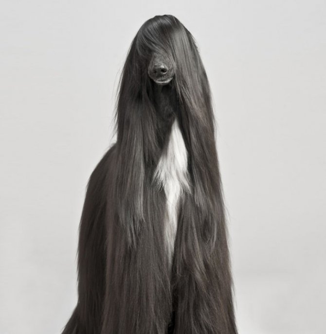 XX Animals That Need To Get A Haircut Real Bad3 700